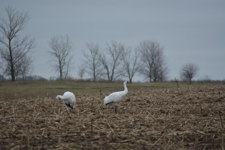 birds15dec2015-061